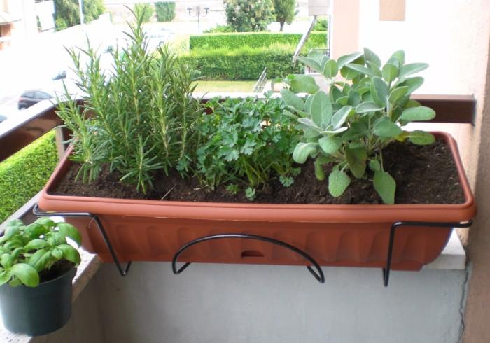 Come coltivare le erbe aromatiche sul balcone rubrica news for Erbe aromatiche in vaso